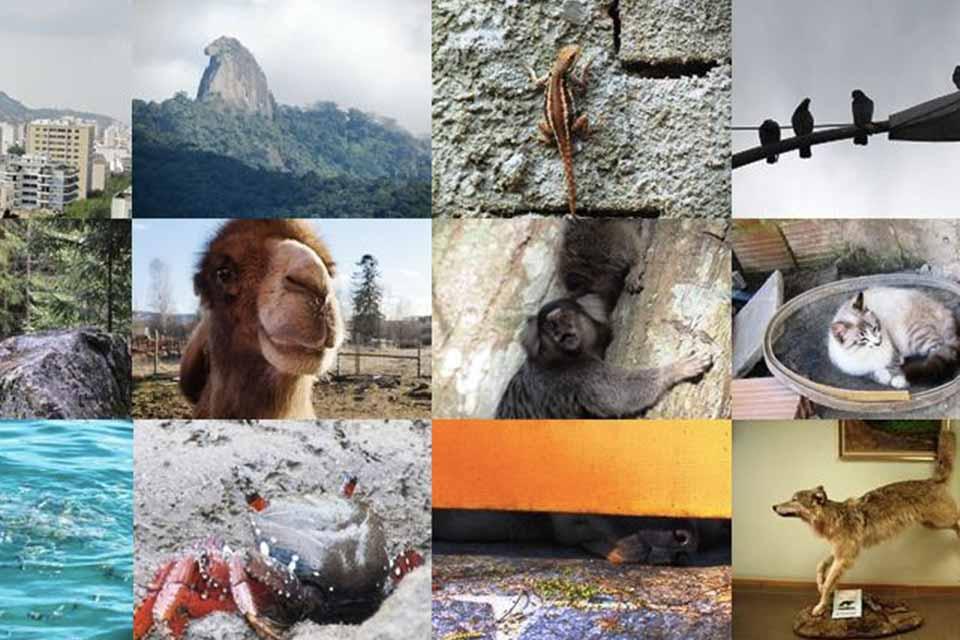 CFP: Animals in the Anthropocene