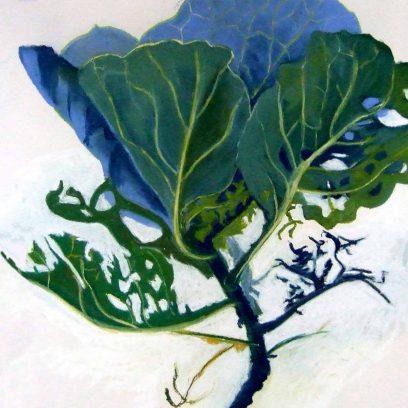 deakin-cabbage-shopmain