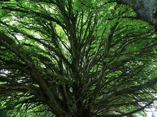 Short Course: Branching Out (collaborations with trees)