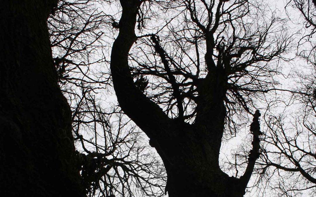 Tree Too Manifesto