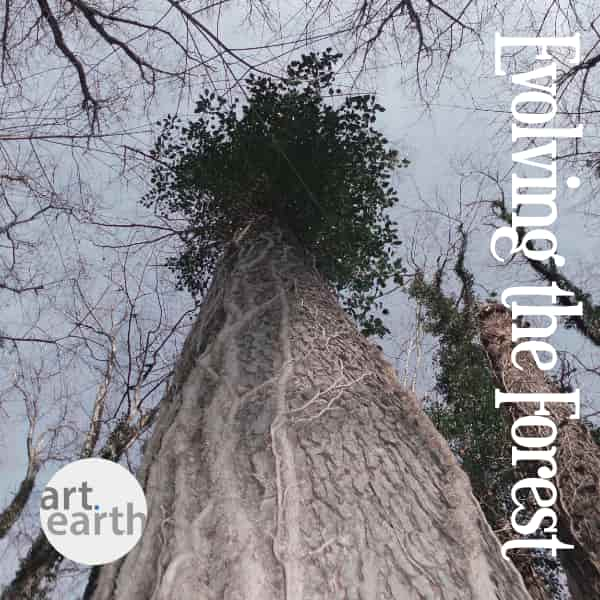 the book cover image for the publication evolving the forest by art dot earth